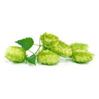 https://bierimport.nl/wp-content/uploads/2017/09/BierImport_Home_Hop.jpg